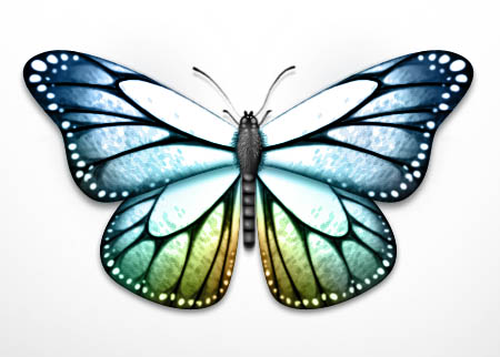 Dessiner un papillon trouvez le tutoriel photoshop cs4 cs5 - Dessin d un papillon ...